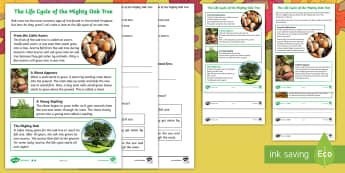 Little Acorns: Life Cycle of an Oak Tree Differentiated Reading Comprehension Activity - twinkl originals, fiction, autumn, KS1, Year 1, Year 2, Reading, science, oaks, acorns, acorn, trees