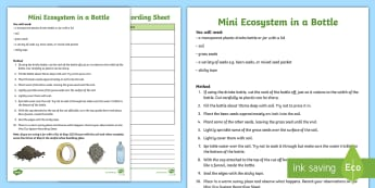 Make a Mini Ecosystem in a Bottle Activity - The environment, natural world, bio dome, exploring nature, discovering an ecosystem