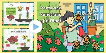 Parts of a Plant PowerPoint Arabic/English - Parts of a Plant PowerPoint - parts of a plant loop card, parts of a plant, plant, plants, parts, lo
