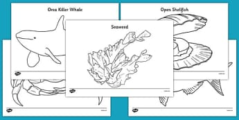 Under the Sea Colouring Pages
