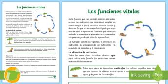 Las funciones vitales: la nutrición Hoja informativa - alimentación, excreción, respiración, nutrientes, seres vivos