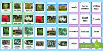Plant Groups Sorting Cards - Plant Groups Sorting Cards Photos - animal, groups, sort, cards, plants, plant, trees, flowers, vege