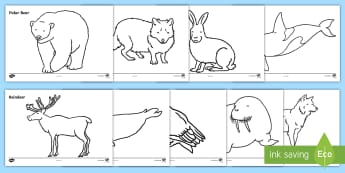 Arctic Animals Colouring Sheets - Arctic, winter, xmas, colouring, fine motor skills, poster, worksheet, fox, hare, polar bear, whale, penguin, huskey, snow, winter, frost, cold, ice, hat, gloves