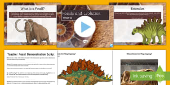 Fossil Worksheets - Evolution Year Task Setter Powerpoint Activity Pack