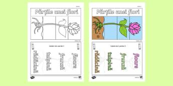Părțile unei flori Fișă de lucru