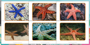 Starfish Photo Pack - originals, fiction, starry eyed stan, Starfish, under the sea, photographs, sea creatures, sea, ocea