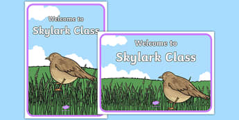 Welcome to Skylark Class Display Posters - welcome to, skylark class, display posters, display, posters, skylark, class, bird