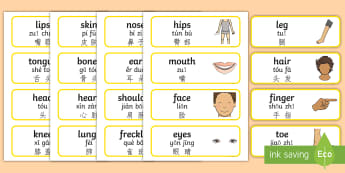 Parts of the Body Topic Word Cards English/Mandarin Chinese/Pinyin - Parts of the Body Topic Word Cards, body parts, my body, nose, eyes, ears, mouth, arm, leg, finger,