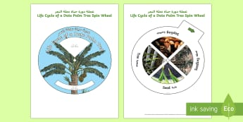 Life Cycle of a Date Palm Tree Spin Activity Arabic/English - Plants and Growth, Growing, seeds, life cycle,Arabic-translation