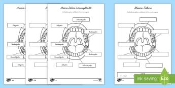 3. Klasse Sachunterricht Primary Resources - Page 3