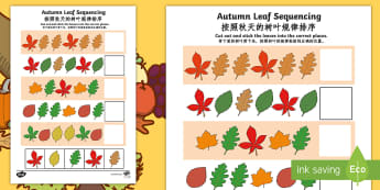 Autumn Leaf Sequencing Activity Sheet English/Mandarin Chinese - Autumn Leaf Sequencing Worksheet - worksheet, sequencing woksheet, autumn, leaf, autumn leaf sequenc
