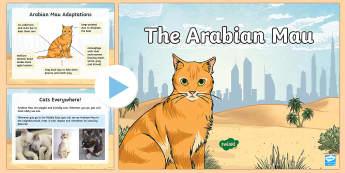 Arabian Mau PowerPoint - Science: Living World, animals, cats, Middle East, UAE, adaptations, UAE, desert.