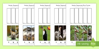 Rainforest Themed Number Sequencing Photo Puzzle - rainforest, jungle, puzzle, number, sequencing, ordering, visual,