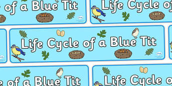 Blue Tit Life Cycle Display Banner - blue tit banner, life cycle of a blue tit banner, display, banner, display banner, blue tit life cycle banner, blue tit