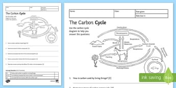 KS3 Carbon Cycle Homework Activity Sheet