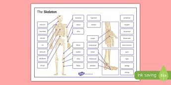 The Skeleton Word Mat