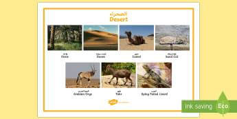 Desert Word Mat Arabic/English - UAE, ADEC, MOE, animals, emirates, information, non fiction, science ,Arabic-translation