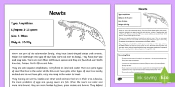 Newts Fact File - newts, amphibians, chapter chat, chapter chat year 3 & 4, Matilda, reading activities
