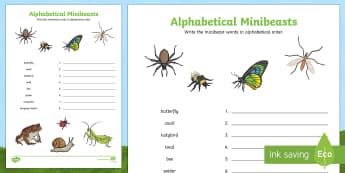 Minibeasts Alphabet Ordering Worksheet - minibeast, sort, order