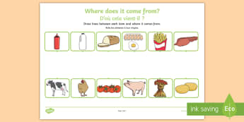 Where Does Food Come From Activity Sheets English/French - food,work sheet,Worksheets, where does food come from, origin of food, cooking, cow, milk, pig, baco