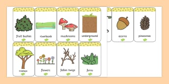 Woodland Animals Habitat Flashcards - Woodland, Habitat, Animals