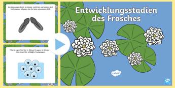 Die Entwicklungsstadien des Frosches PowerPoint Präsentation - Frosch, Frösche, Kaulquappe, Teich, Tiere, Wald, Gewässer, Sachkunde,,German