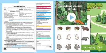 EYFS Woodland Animal Habitats Adult Input Plan and Resource Pack - EYFS Owlets, Owl Babies, Martin Waddell, owl, nature, british, wildlife, nocturnal, night, animals,