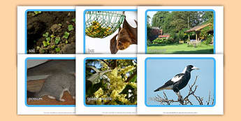 Backyard Habitat Photo Display Pack - australia, Science, Year 1, Habitats, Australian Curriculum, Backyard, Living, Living Adventure, Good to Grow, Ready Set Grow, Life on Earth, Environment, Living Things, Animals, Plants, Photos, Photographs, Disp