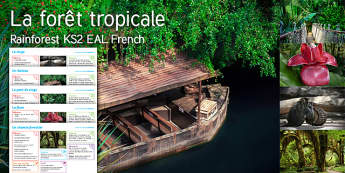 Imagine Rainforest KS2 Resource Pack French - river, boat, rope, bridge, flower, monkey, forest, path, EAL, French,French