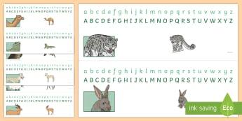 Arabian Animal themed Alphabet Strips - Science: Living World, Arabian, animals, camel, oryx, falcon, saluki, lizard, gazelle, hare, leopard