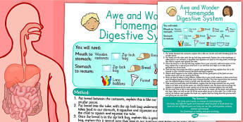 Homemade Digestive System Awe and Wonder Science Activity - awe