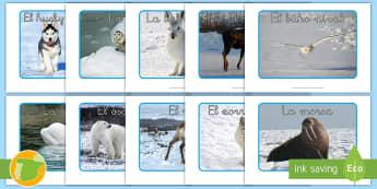 Imágenes de exposición: Animales polares - animales, hábitats, polo Norte, polares, antártica,Spanish