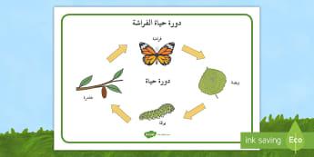 دورة حياة الفراشة بوربوينت