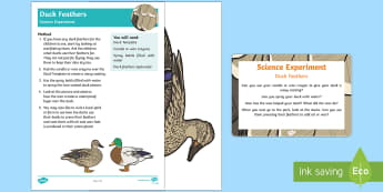 EYFS Duck Feathers Science Experiment and Prompt Card Pack - EYFS Pets, Animals, National Pet Month, ducks, birds, waterproof, scientific