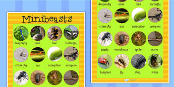 Large Minibeasts Photo Display Poster - minibeast, animal, poster
