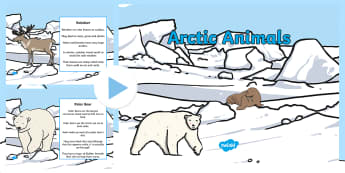 Winter Arctic Animals PowerPoint - arctic, animals, powerpoint, winter