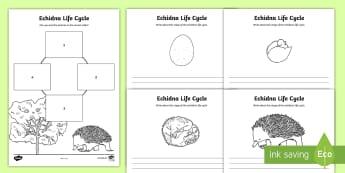 Echidna Life Cycle Activity Sheets - Australian Curriculum Biological sciences, ACSSU030, ACSSU072, lifecycles, echidna, puggle, Australi