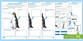 Antarctica Virtual Reality Learning and Activity Pack to support teaching on Google Expeditions - antarctica, environment, animals, adaptations, food webs