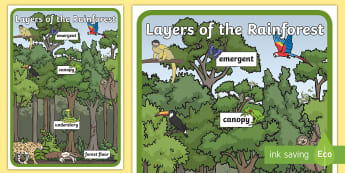 Layers of the Rainforest Large Display Poster - rainforest, animals of the rainforest, layers of the rainforest, emergent, canopy, understory, fores