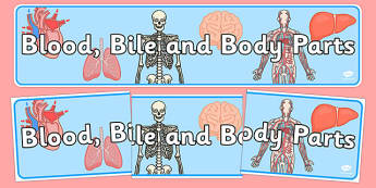 Blood, Bile and Body Parts Display Banner - blood, bodies, humans, science, biology, heart, display, ks2, key stage 2, ks 2