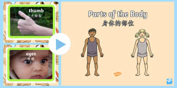 Parts of the Body PowerPoint English/Mandarin Chinese - Parts of the Body PowerPoint - parts, body, powerpoint, human, pp, ppt, EAL
