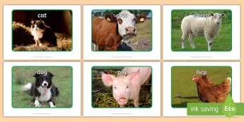 Farm Animal Display Photos - Farm, animals, display photos, cow, pig, dog, photographs, farming, farmyard