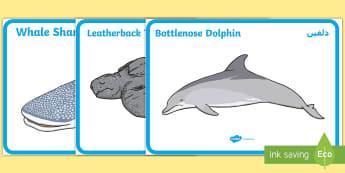 Arabian Gulf Marine Animals Display Posters Arabic Translation - Arabic/English - الإنجليزية / العربية-Arabic-translation - marine animals, Arabian Gulf, Arabian Sea, UAE Animals, UAE About, Whale Shark, Dugong EAL Arabic,Ar
