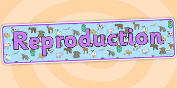 Reproduction Animals Display Banner - reproduction, reproduction banner, animal reproduction banner, reproduction display, animals display, ks2 science