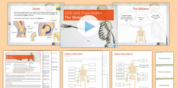 Cells and Organisation Lesson 6: The Skeleton  - skeleton, joints, bones, bone marrow, ligaments, movement, cartilage