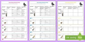 Describing British Birds Differentiated Activity Sheets - KS1 activity, birds, describing, features, types of birds, British birds, biology, animals, characte