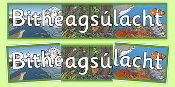 Bithéagsúlacht Biodiversity Display Banner Gaeilge - Biodiversity, Green schools, environment, display, banner, green flag, nature, Irish, Gaeilge