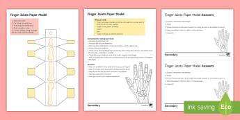 Finger Joints Model Paper Craft - joint, joints, skeleton, model, Bones, muscle, tendon, phalanges,