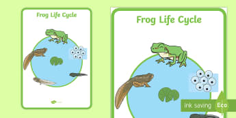 Frog Life Cycle  Poster - - frog life cycle,frogspawn, tadpole, froglet, frog, display