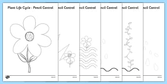 Plant Life Cycles Pencil Control Sheets - plant, life cycles, pencil control